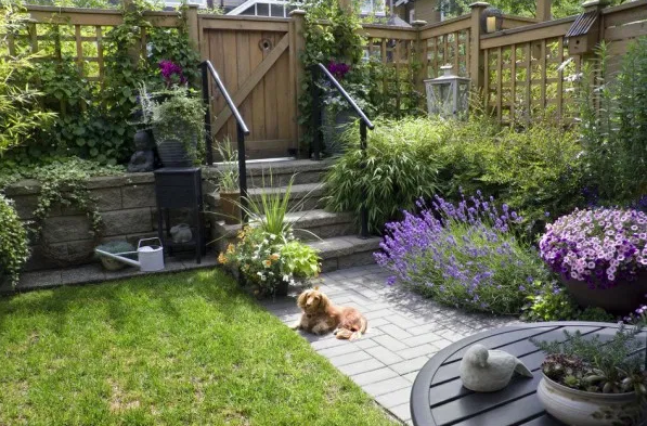 Pet-Friendly Backyard